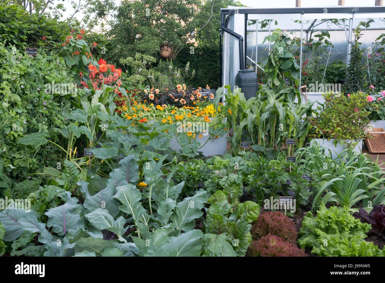 Essbare Pflanzen Von Mangold Karotten Zwiebeln Kohl Dahlien