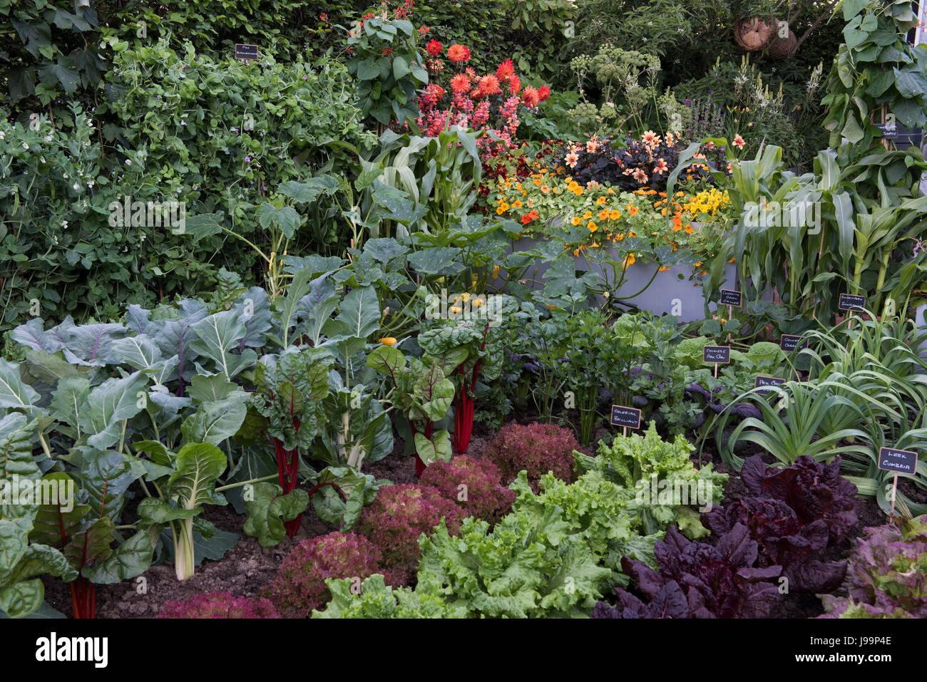 Beliebt Bevorzugt Essbare Pflanzen von Mangold, Karotten, Zwiebeln, Kohl und Pak @TO_06