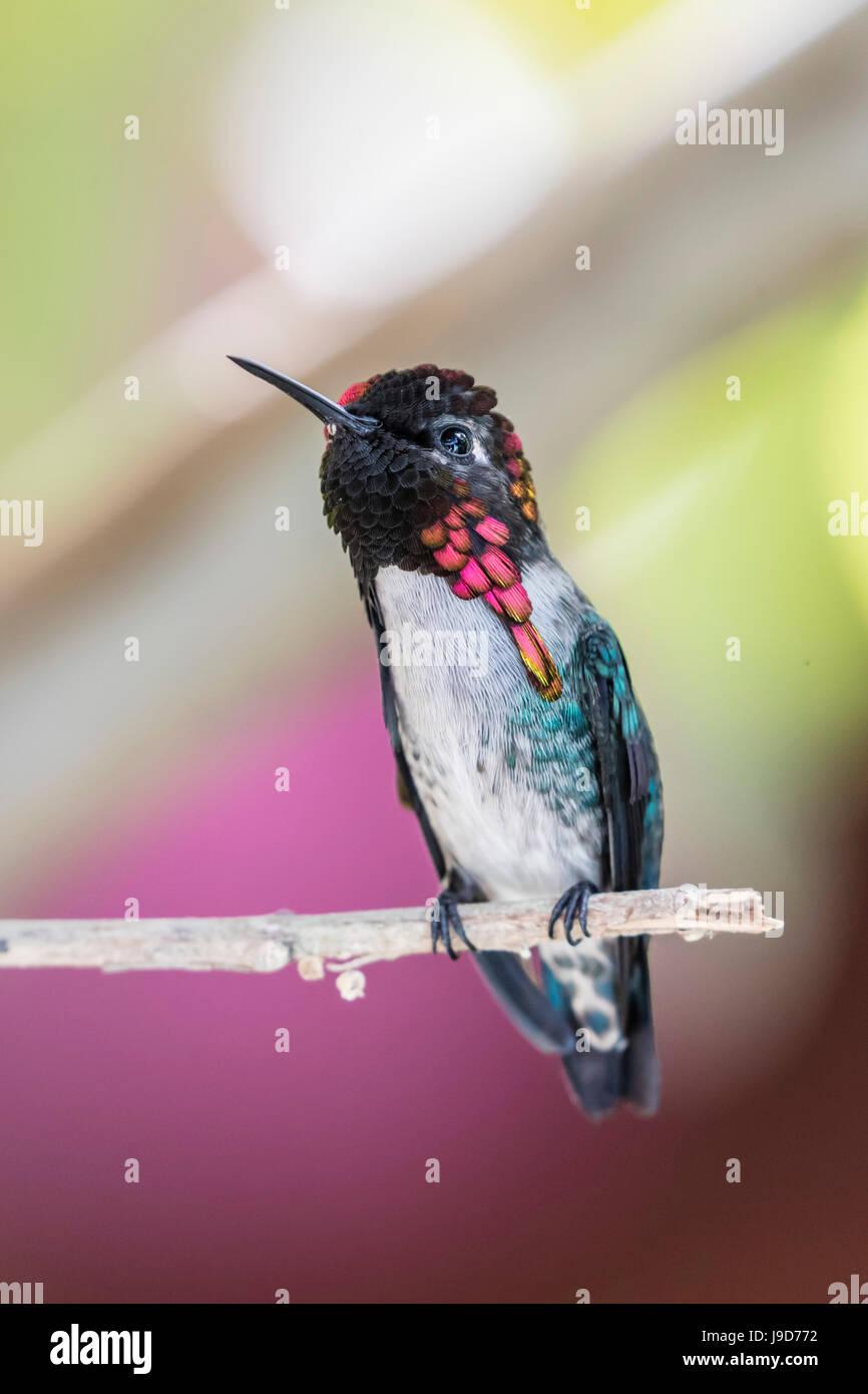 Schön Ruby Throated Kolibri Malvorlagen Zeitgenössisch - Malvorlagen ...