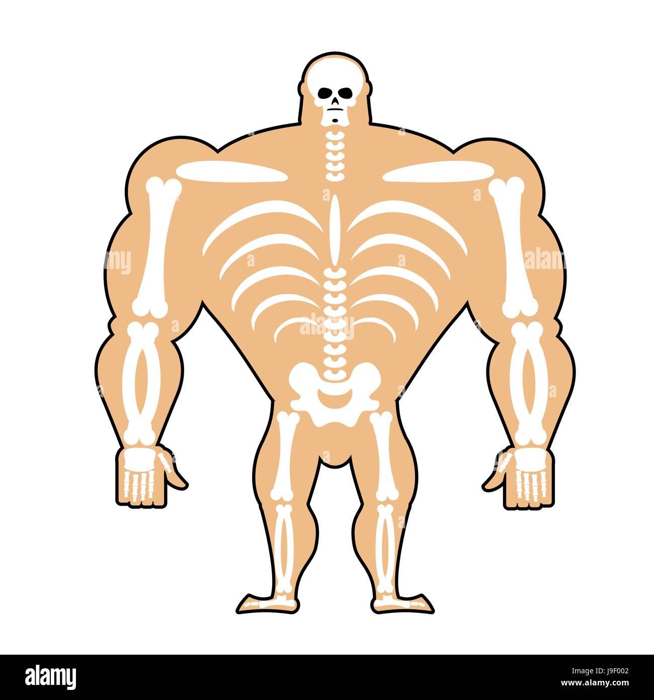 menschlichen Struktur. Skeleton Männer. Bau des Athleten. Knochen ...