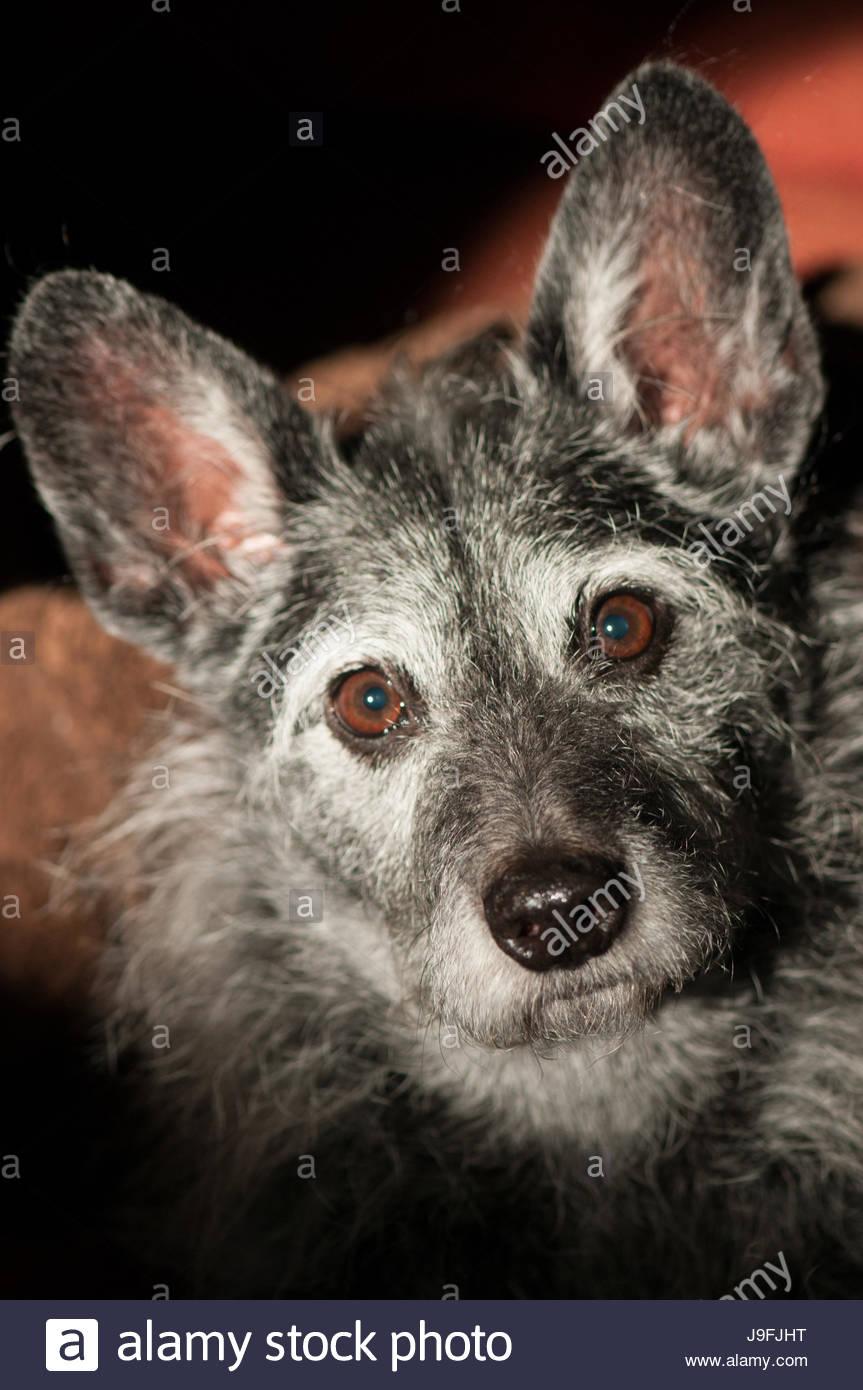 Gemütlich Draht Behaarter Wheaten Terrier Fotos - Elektrische ...