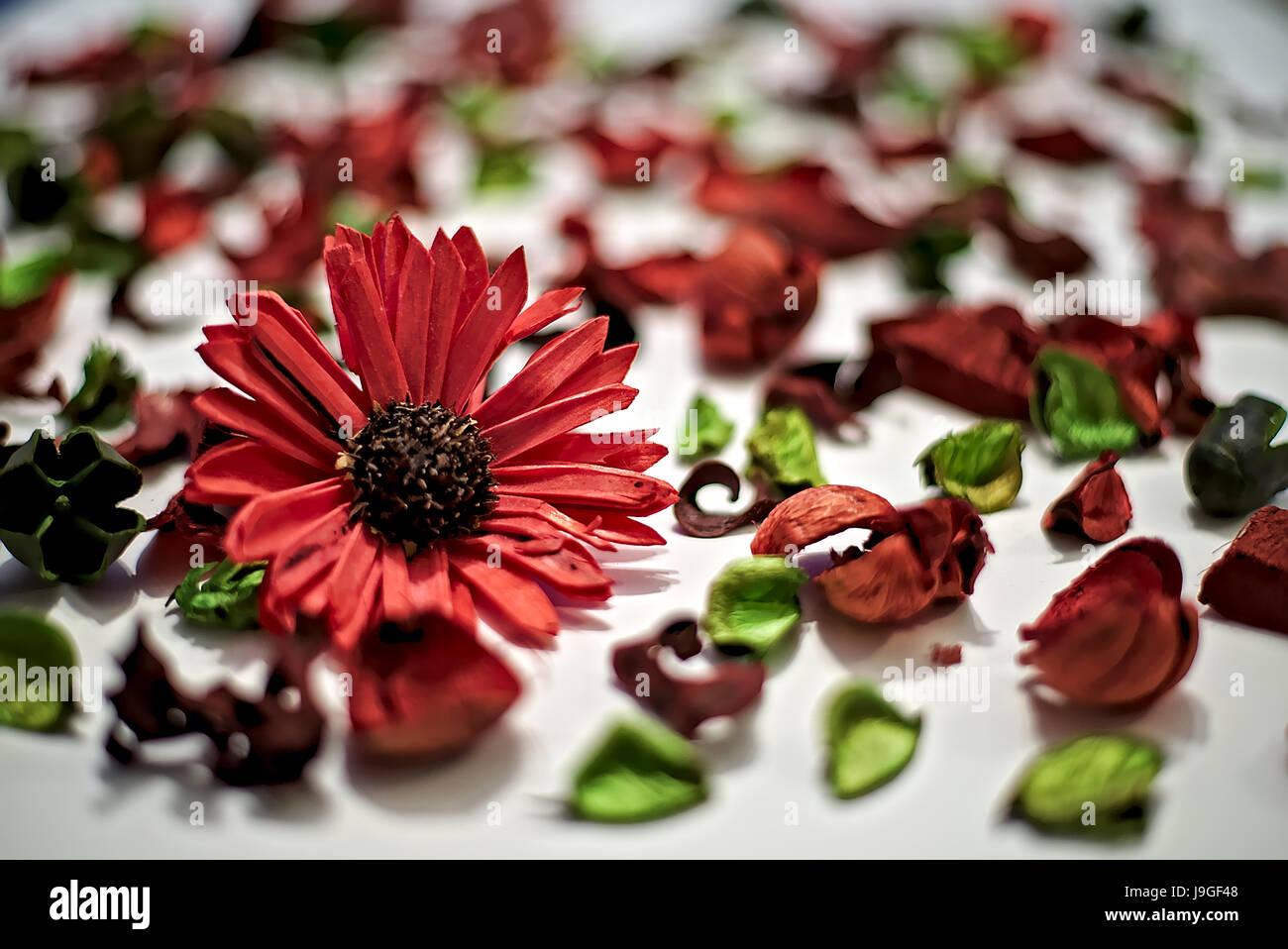 Gemütlich Frühlingsblumen Die Blätter Färben Fotos - Druckbare ...