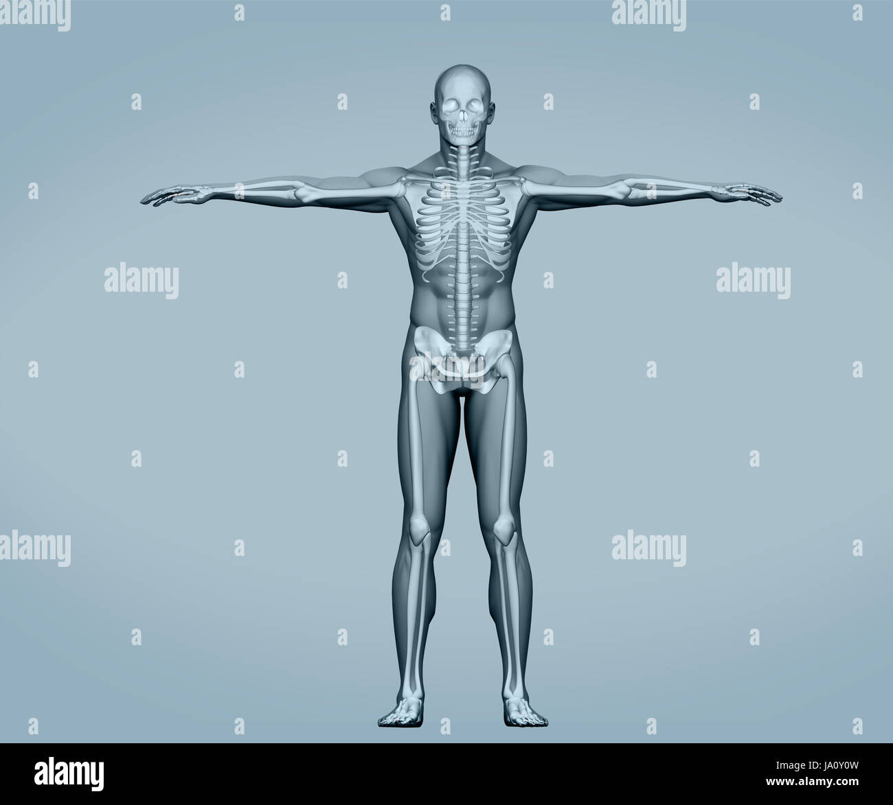 Bones Outstretched Stockfotos & Bones Outstretched Bilder - Alamy