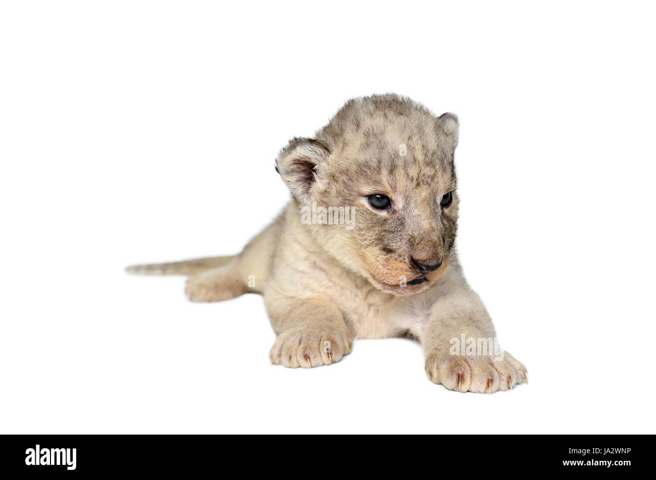 Großartig Baby Tier Färbung Seite Galerie - Malvorlagen Von Tieren ...
