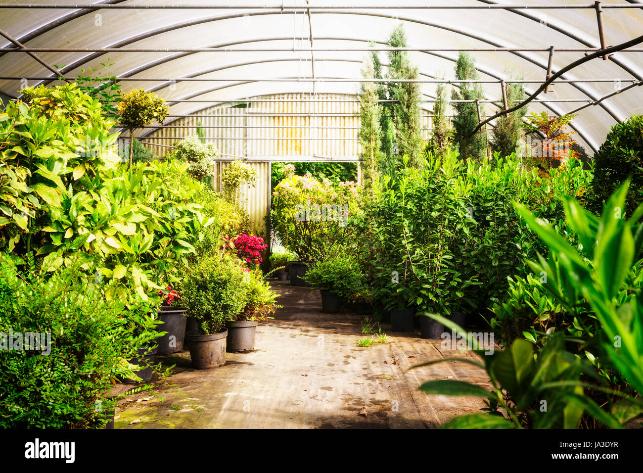 Horticulture Interior Greenhouse In Spring Stockfotos & Horticulture ...