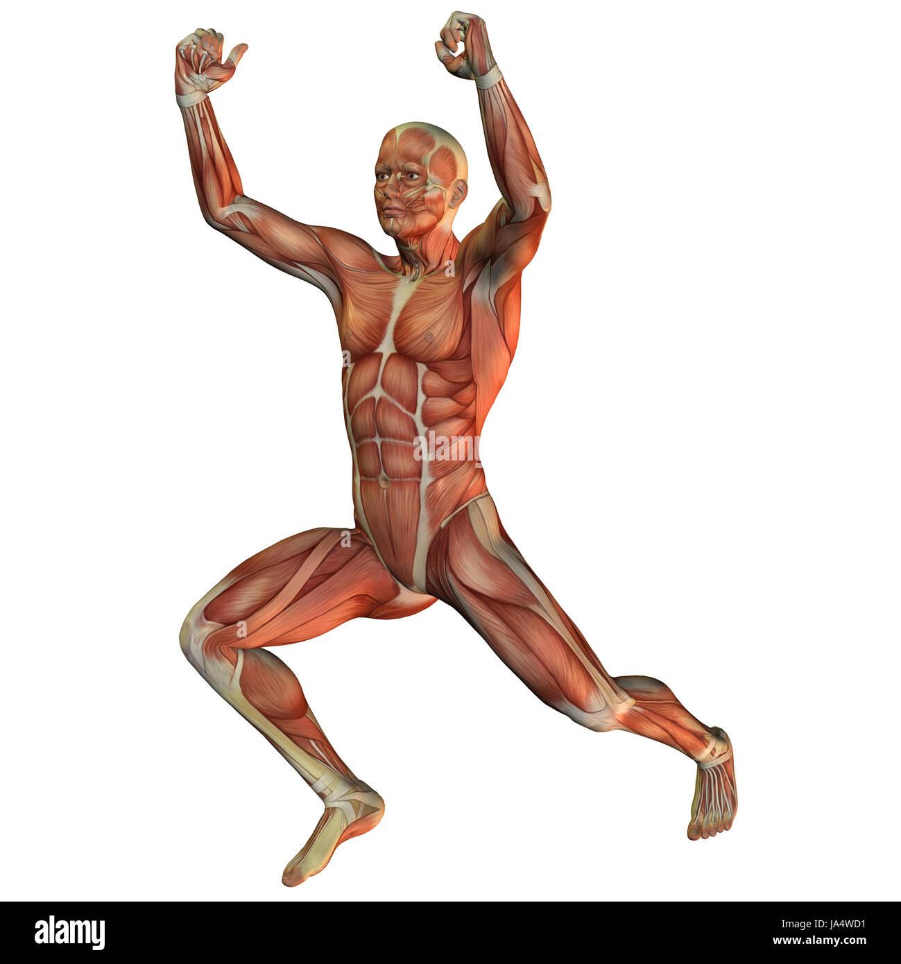 Nett Bild Von Organsystem Fotos - Menschliche Anatomie Bilder ...