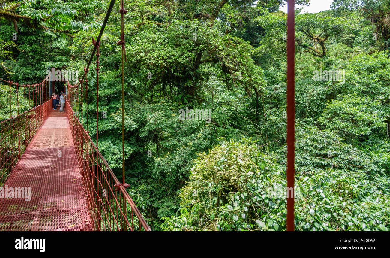 Brücke im Regenwald von Monteverde Stockbild