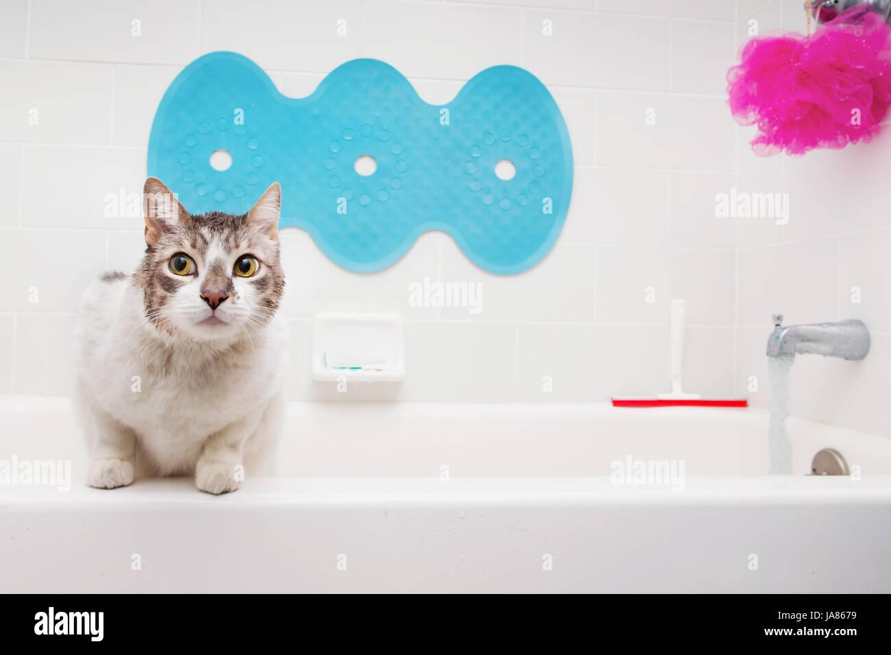 Weiße Katze in Badewanne mit vorsichtigen Ausdruck. Stockbild
