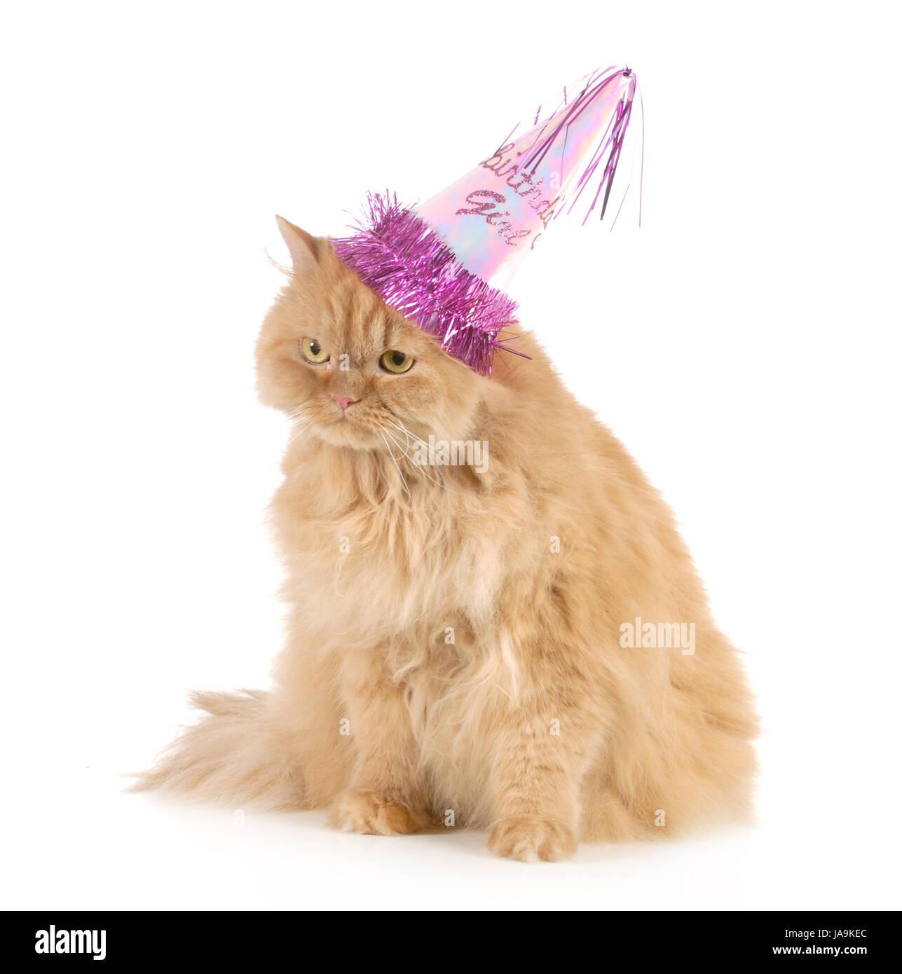 Geburtstag Bilder Katze Geburtstagswunsche Geburtstag Bilder