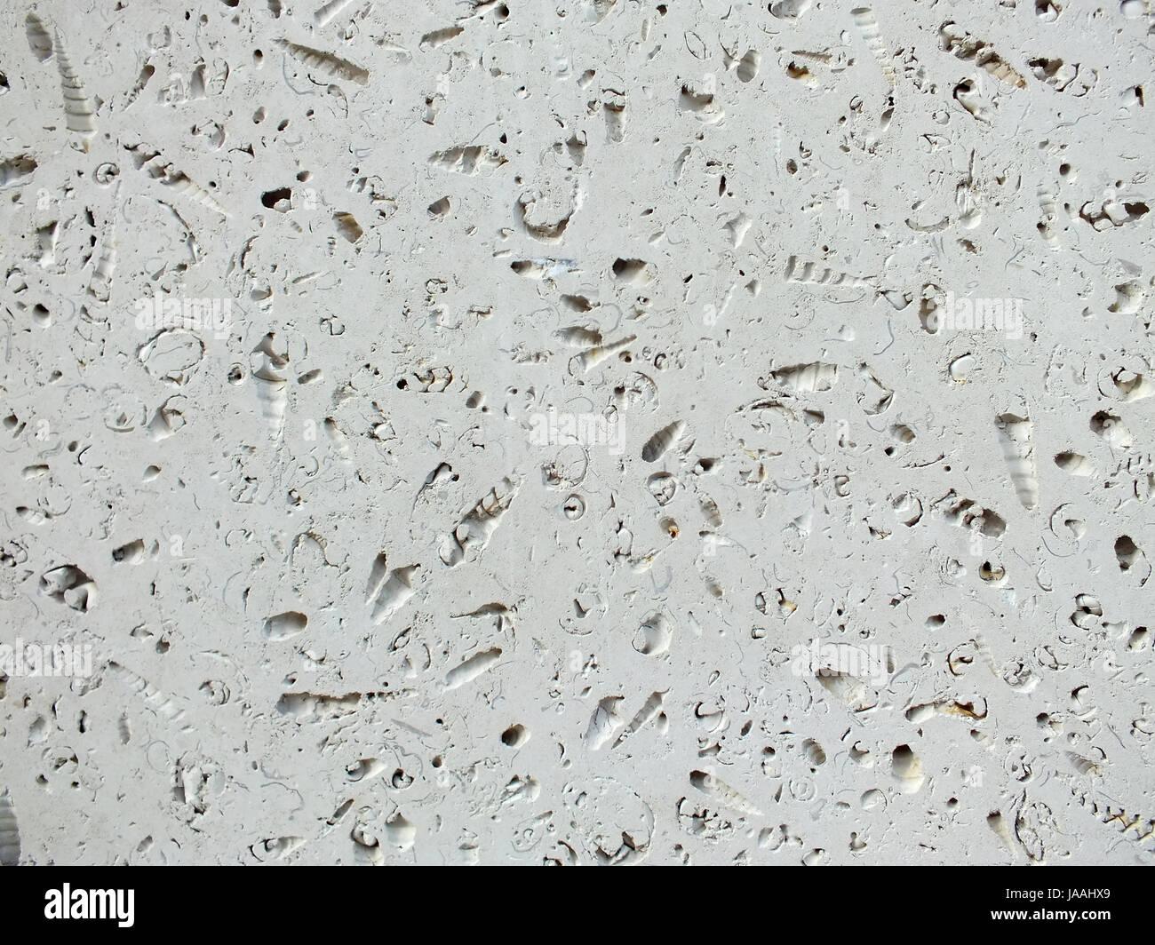 Platte Aus Weissem Fossilen Kalkstein Verwendet In Pflaster Und Bau
