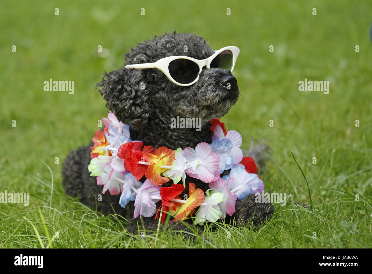 Urlaub, Ferien, Urlaub, Ferien, farbige, bunte, wunderschöne, Stockbild