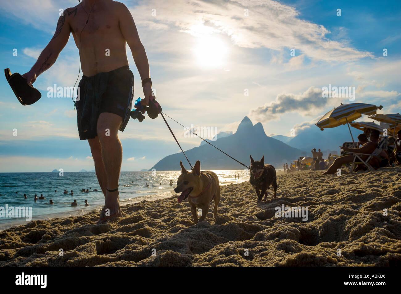 RIO DE JANEIRO - 7. Februar 2017: Mann mit zwei kleinen Hunden am Strand von Ipanema mit dem Sonnenuntergang hinter Stockbild