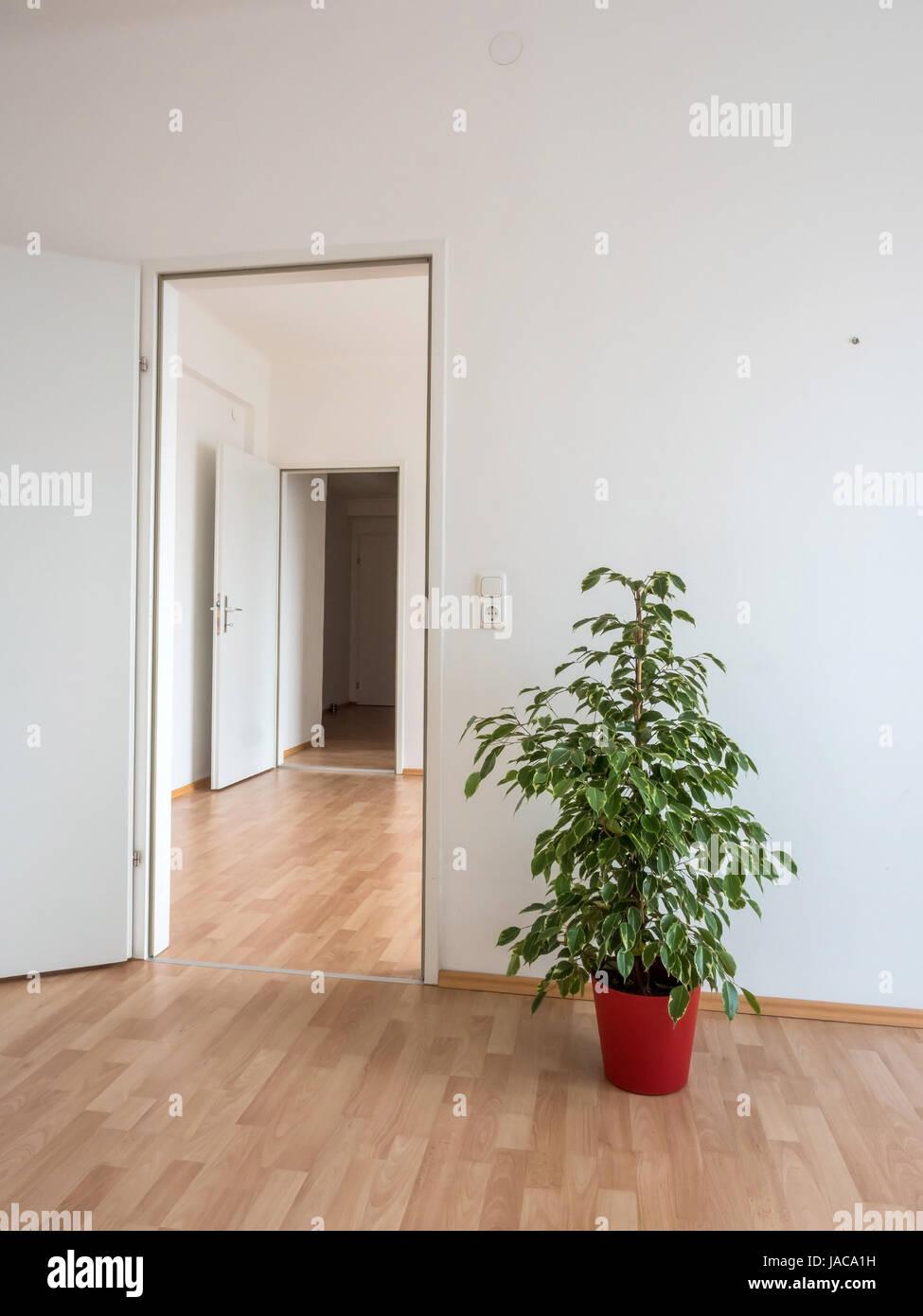 Neue Wohnung Wurde In Eine Blühende Topfpflanze Aussehen Verbessert.  Symbolische Foto Für Umzug,? Bersiedlung. Kein Geld Für Möbel Wegen Hohen