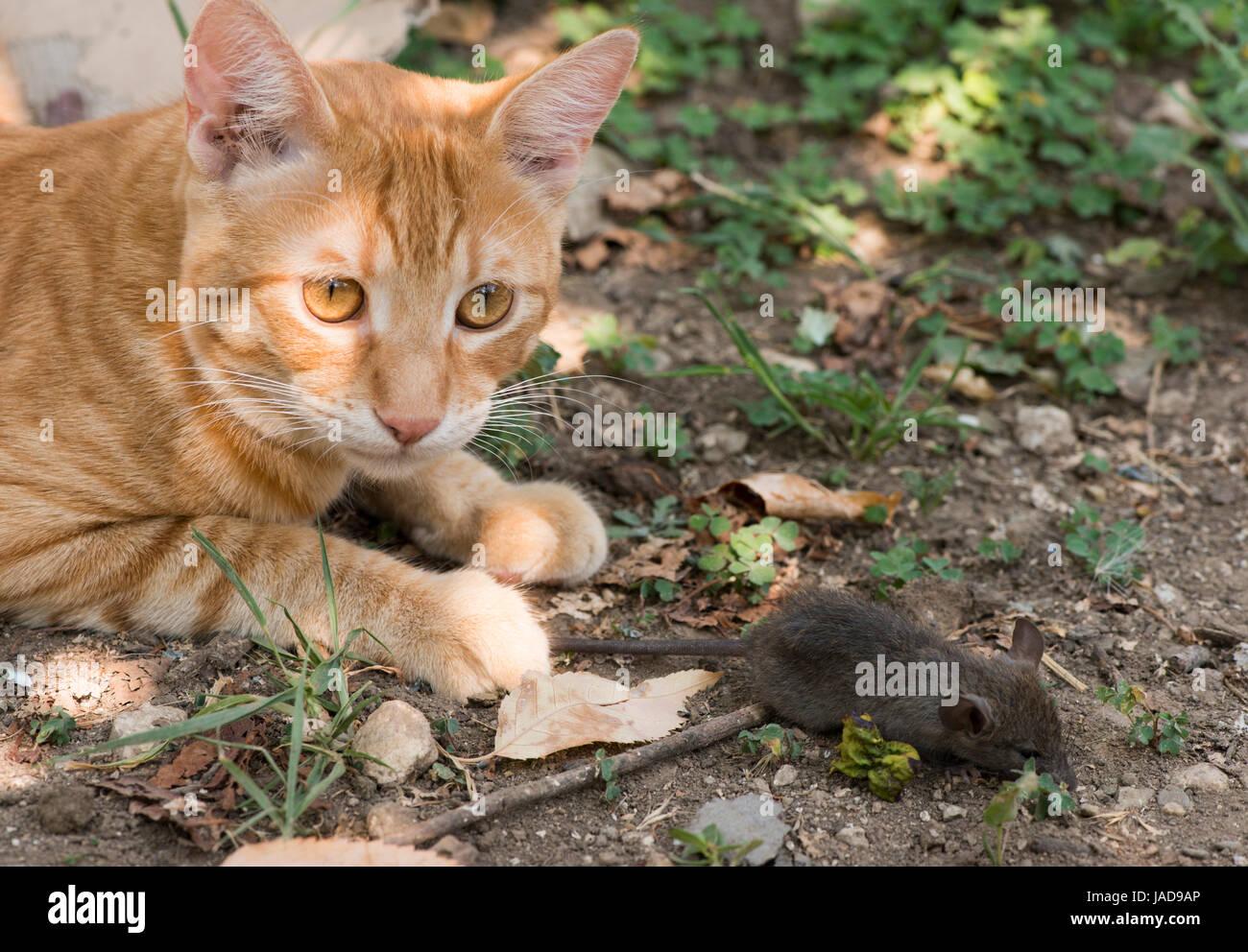 Katz Und Maus Im Garten Katze Maus Fangen Stockfoto Bild