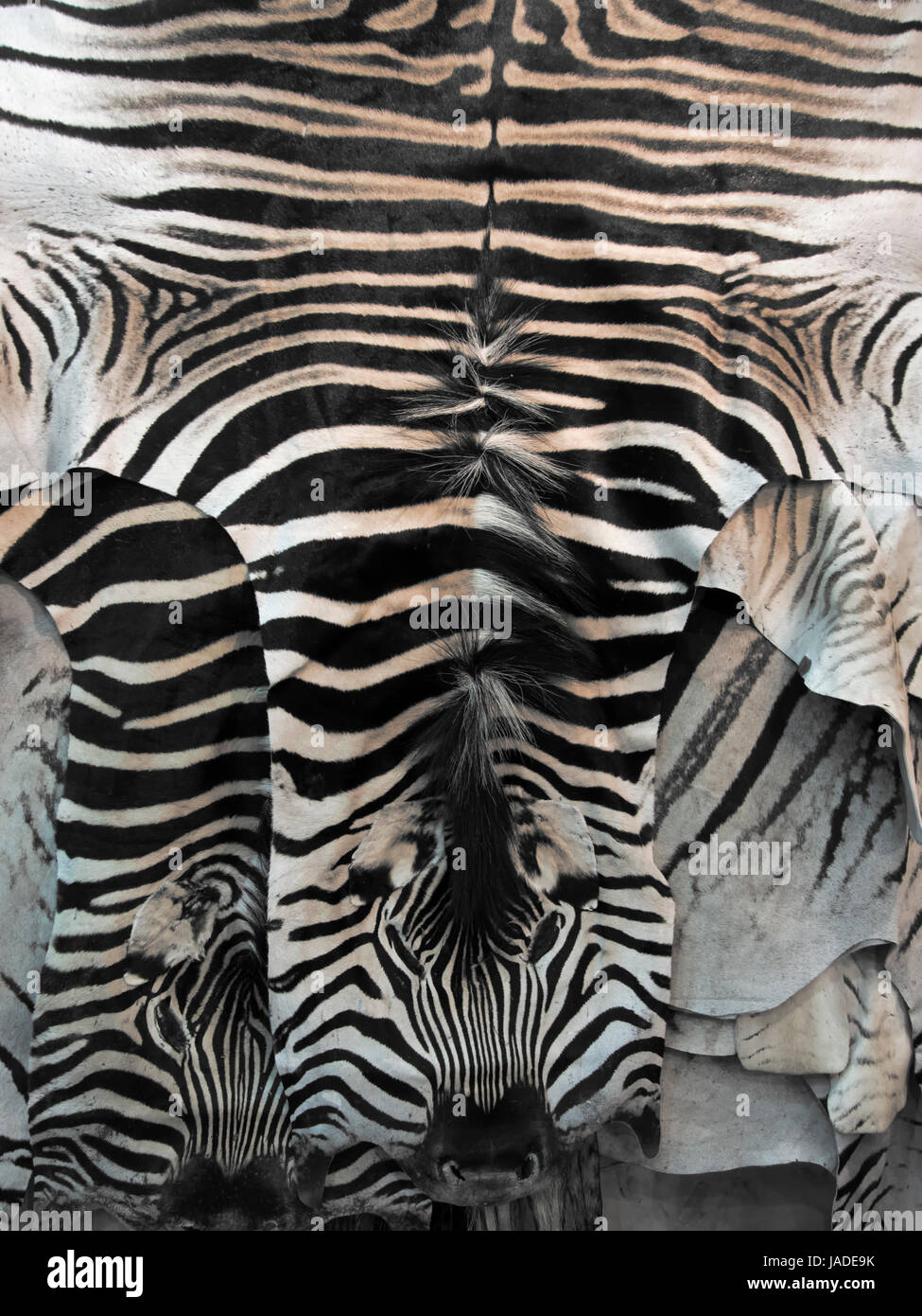 zebra rug stockfotos zebra rug bilder alamy. Black Bedroom Furniture Sets. Home Design Ideas