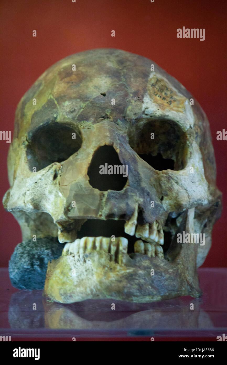 Menschlicher Schädel mit dunklem Hintergrund. Konzept des Todes ...