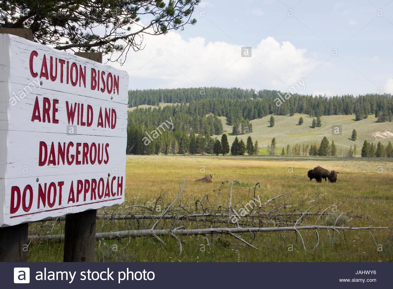 Ein Schild warnt Touristen nicht zu wilden Bisons im Yellowstone zu nähern. Stockbild