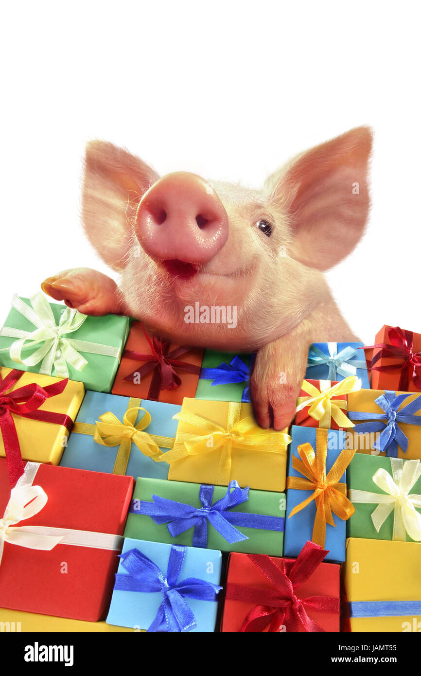 Weihnachtsgeschenke Witzig.Geschenk Berg Ferkel Porträt Weihnachten Valentinstag