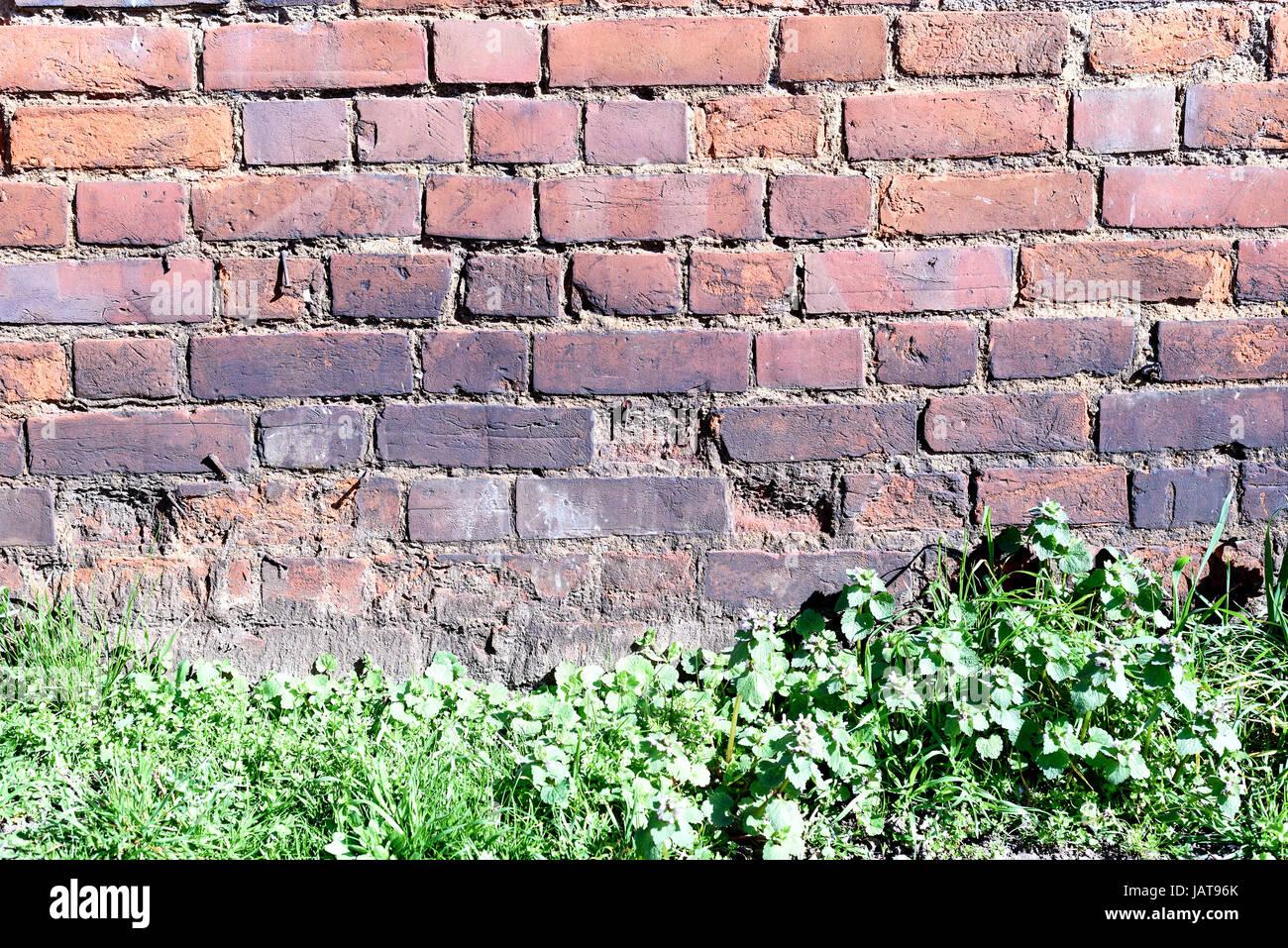 Alten Bröckelnden Mauer Mit Einer Reihe Von Unkraut Und Rasen Wachsen An  Der Unterseite