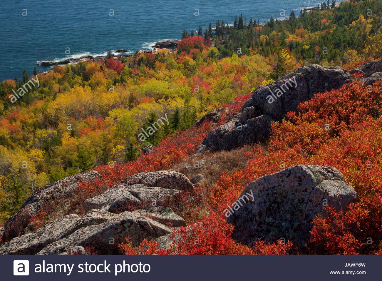 Vibrant Farben des Herbstes auf Piste hinunter zum östlichen Ufer des Acadia National Park. Stockbild
