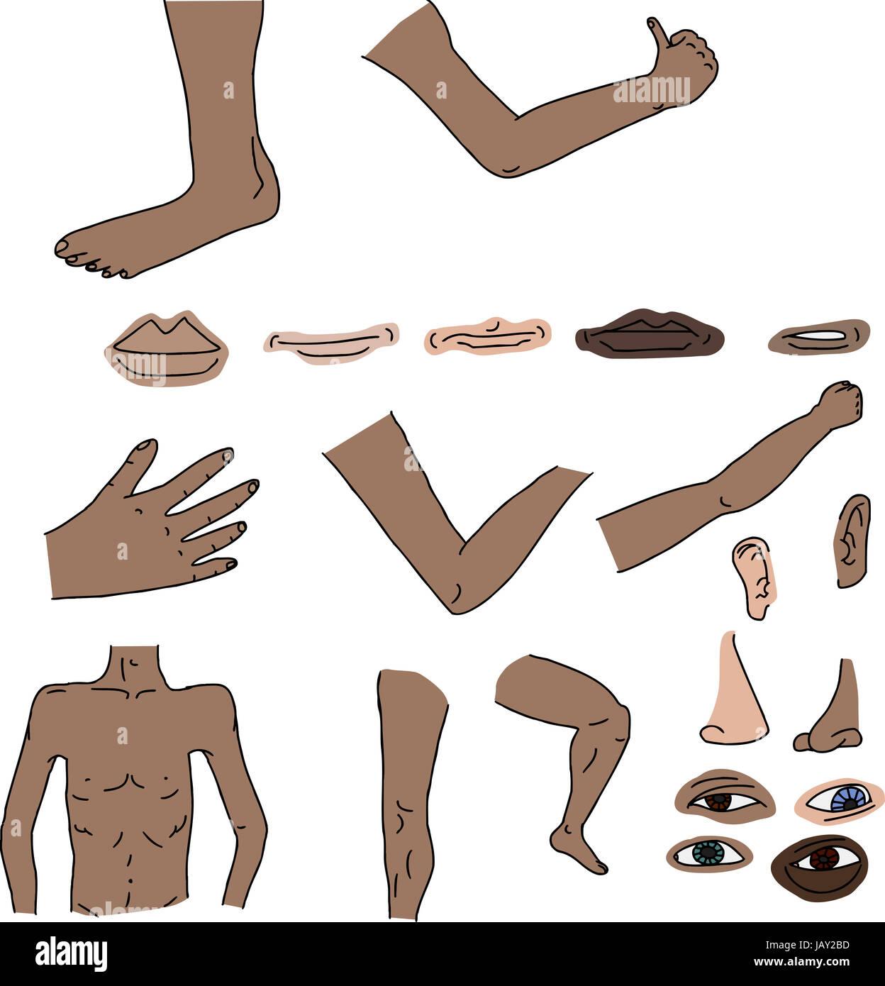 Body Parts Nose Illustration Human Stockfotos & Body Parts Nose ...