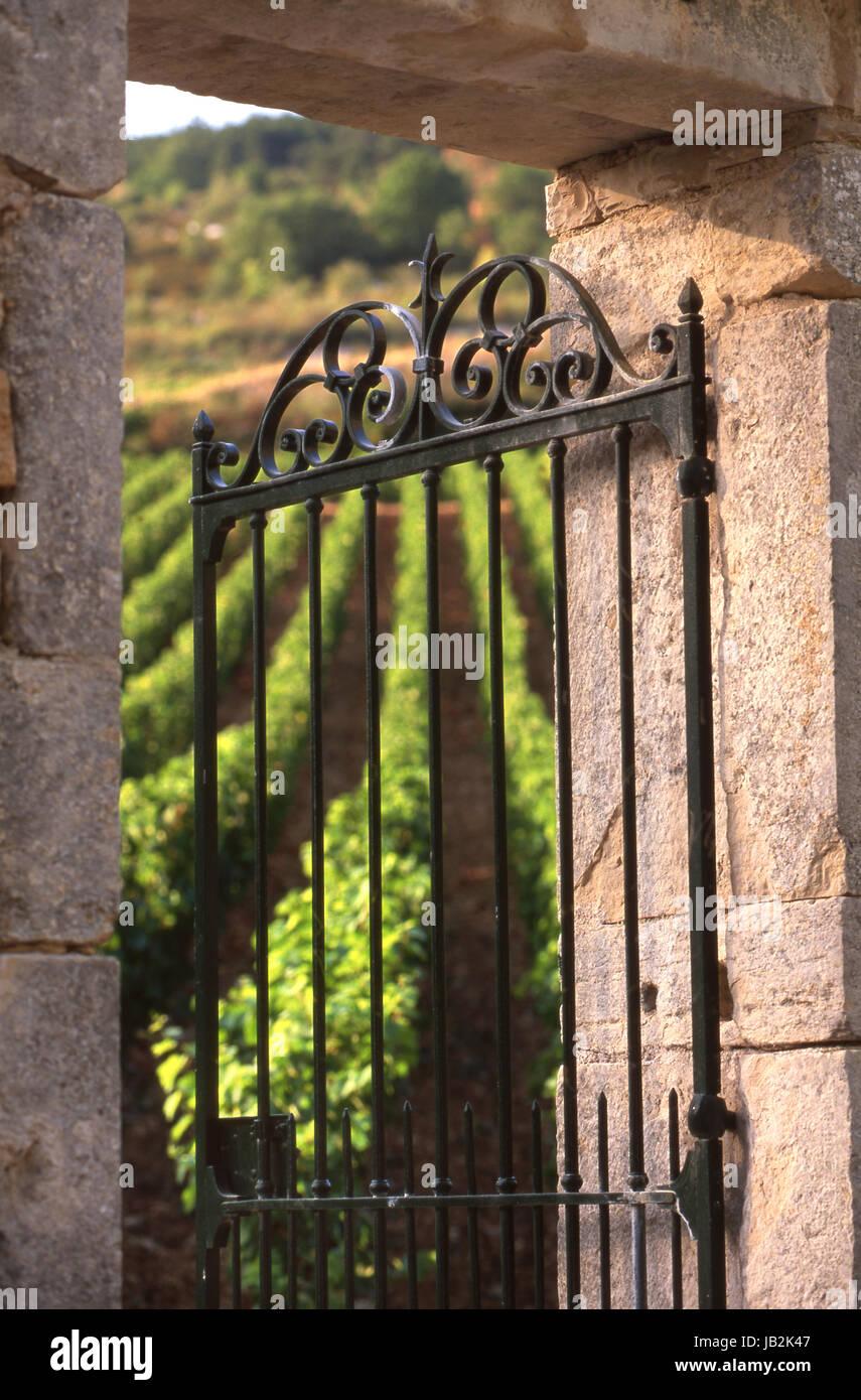 Offenen Metall Eingangstor und Stein Bogen La Maladière Weinberg Santenay, Côte d ' or, Frankreich. Stockbild