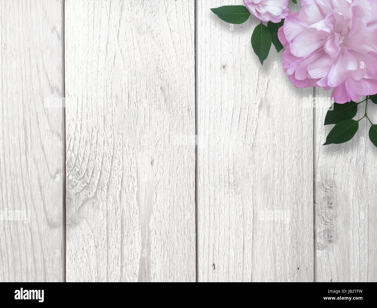 Lila Rose über Weiß Gekalkt Holz Hintergrund Stockfoto Bild