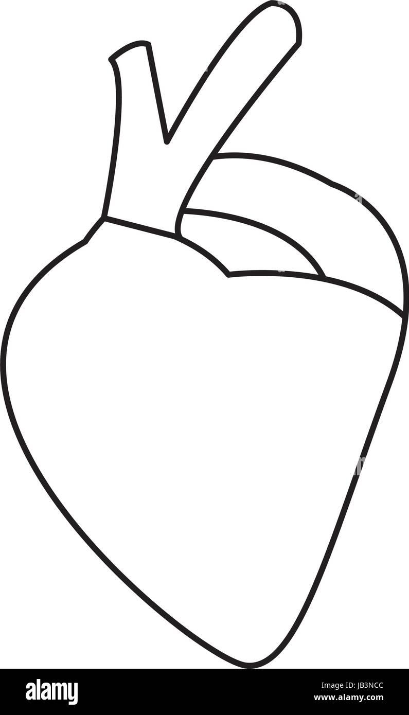 Herzen des menschlichen Körpers Gesundheit Medizin Kardiologie ...