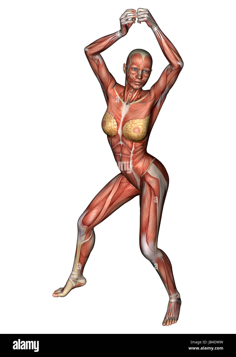 Tolle Weibliche Anatomie Cartoon Ideen - Menschliche Anatomie Bilder ...