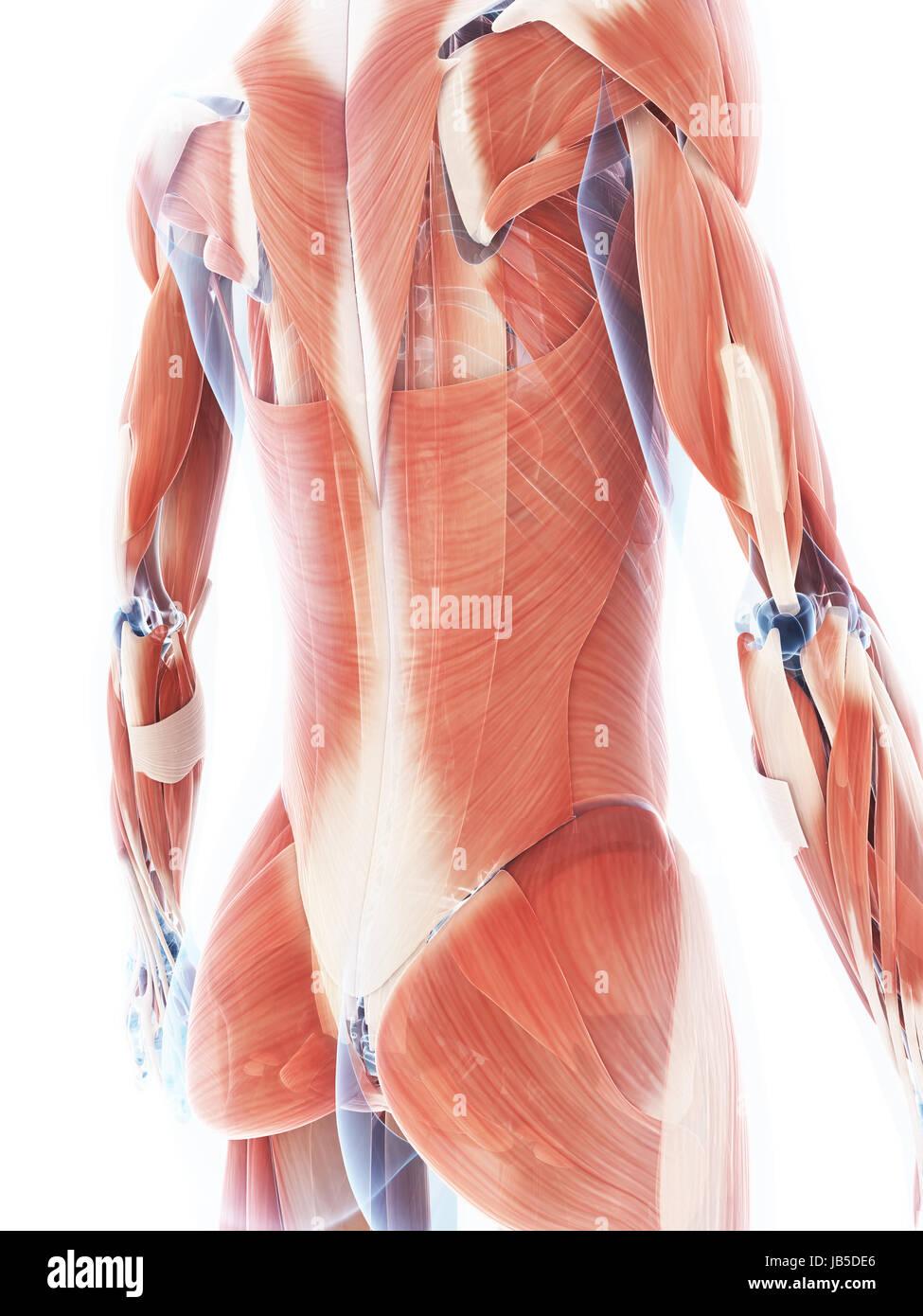 Ungewöhnlich Anatomie Und Physiologie Färbung Arbeitsmappe Antworten ...