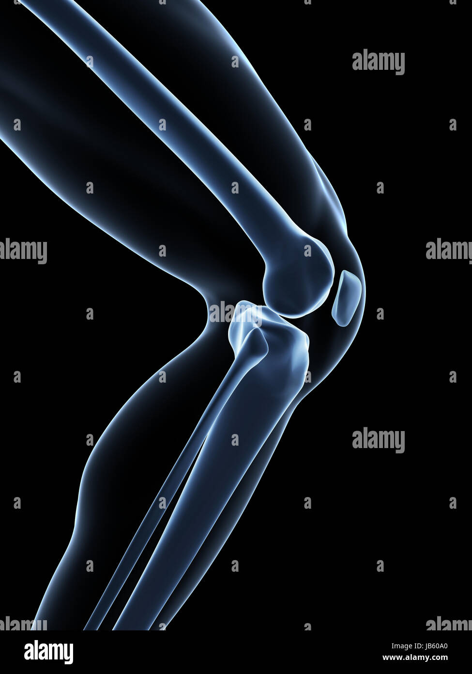 Lateral Collateral Ligament Stockfotos & Lateral Collateral Ligament ...