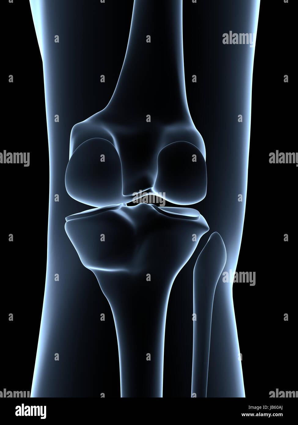 Großartig Menschliche Knie Anatomie 3d Galerie - Menschliche ...