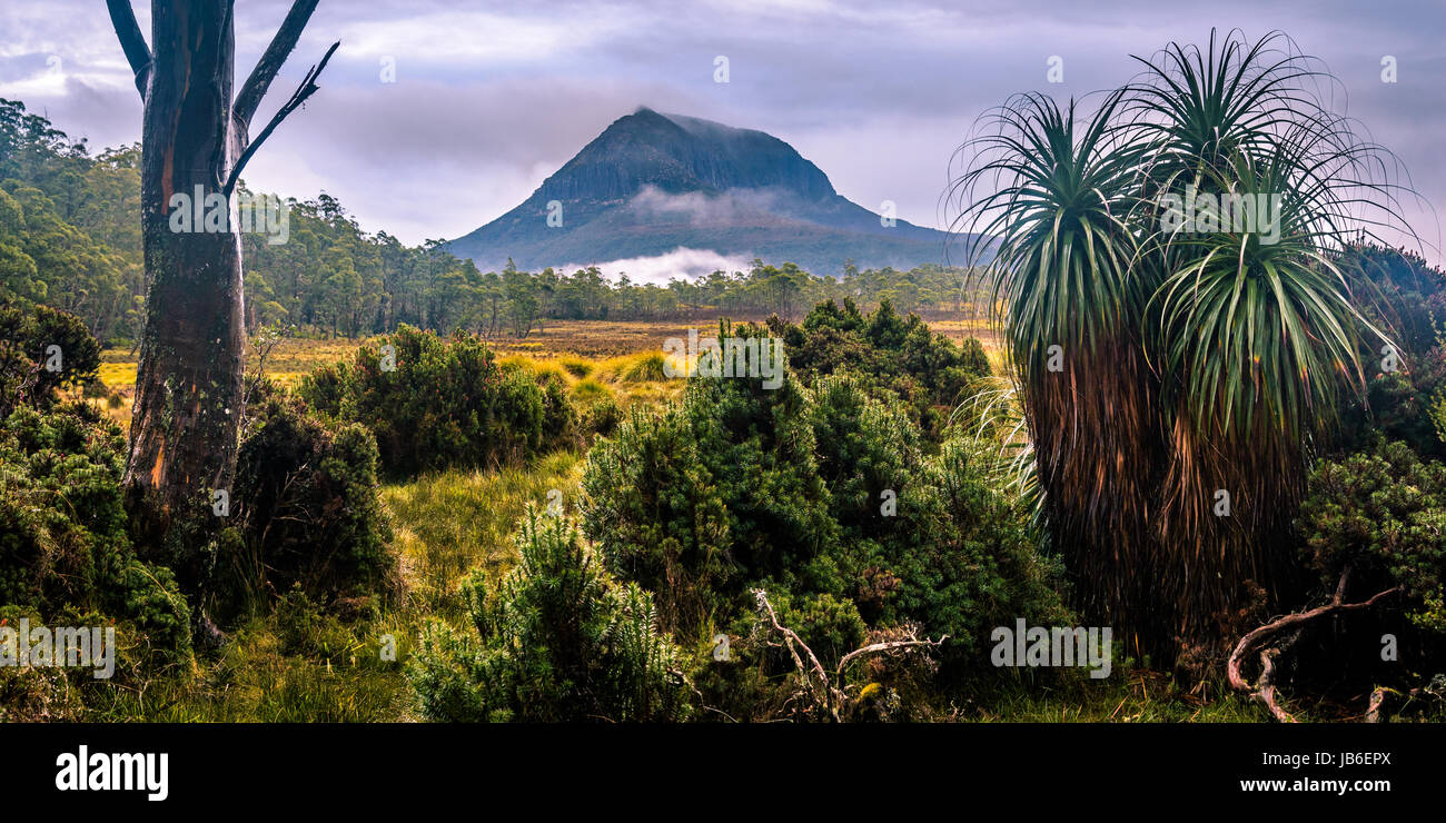 Pandani und Mount Pelion West bei Overland Track, Tasmanien Stockbild