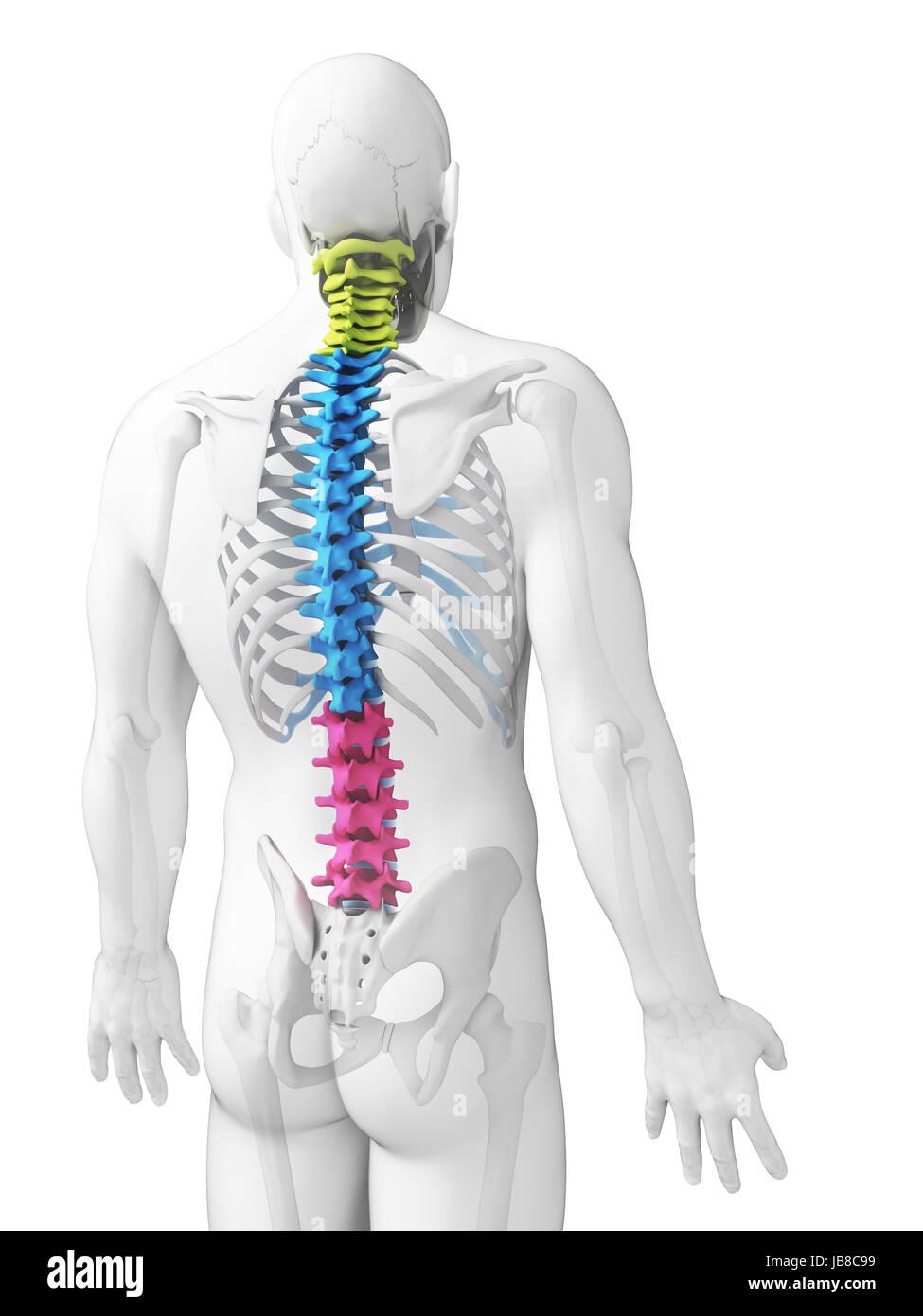 Beste Abschnitte Der Körperanatomie Bilder - Anatomie Von ...