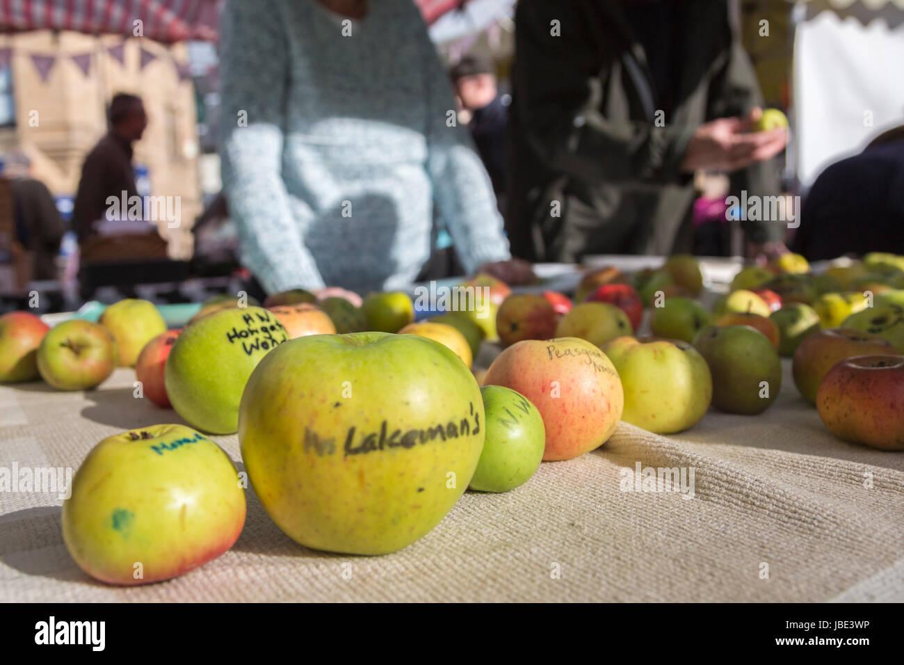 Frau Lakeman und anderen alten Apfel-Sorten auf dem Markt an Apple Day, Hexham Bauernmarkt, Northumberland, UK, Stockbild