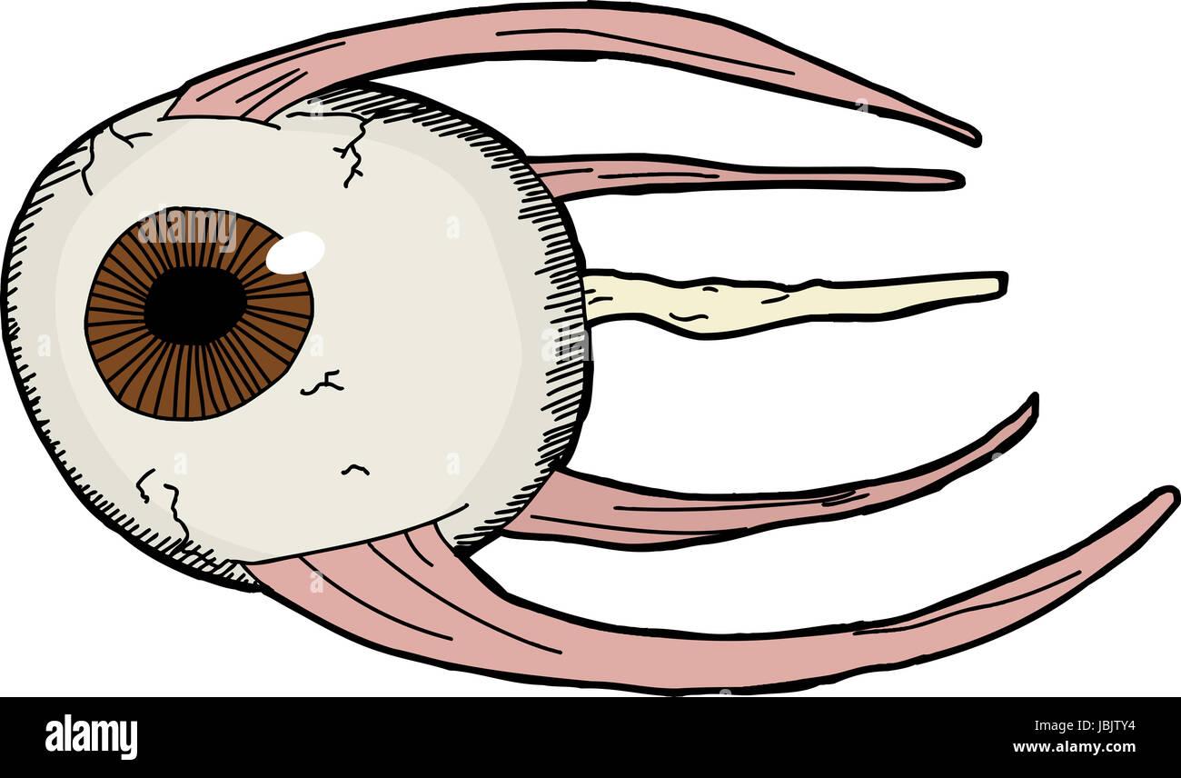 Schön Muskeln Des Auges Galerie - Menschliche Anatomie Bilder ...