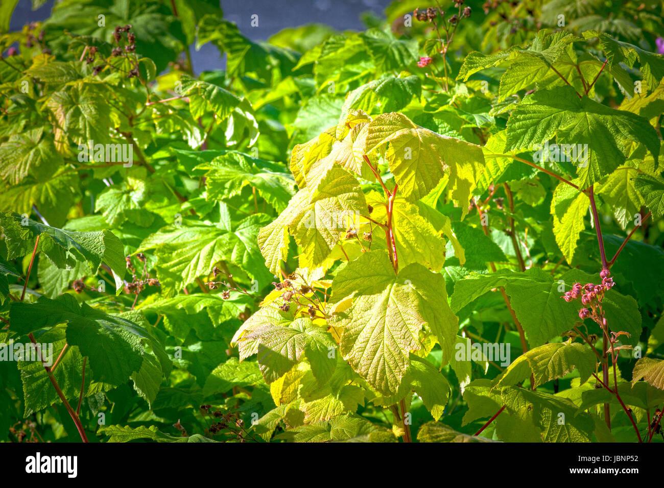 Auf einem buschigen Baum Blätter im Herbst. Strahlender Sonnenschein ich das Zentrum. HDR-Tonung. Stockbild