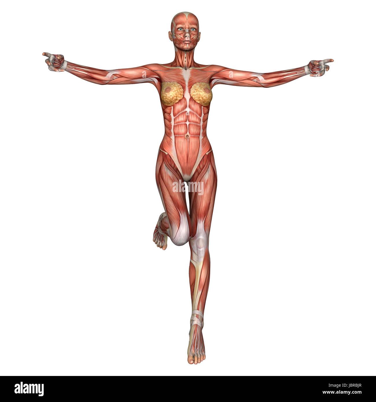Niedlich Weibliche Anatomie Für Den Künstler Bilder - Anatomie Ideen ...
