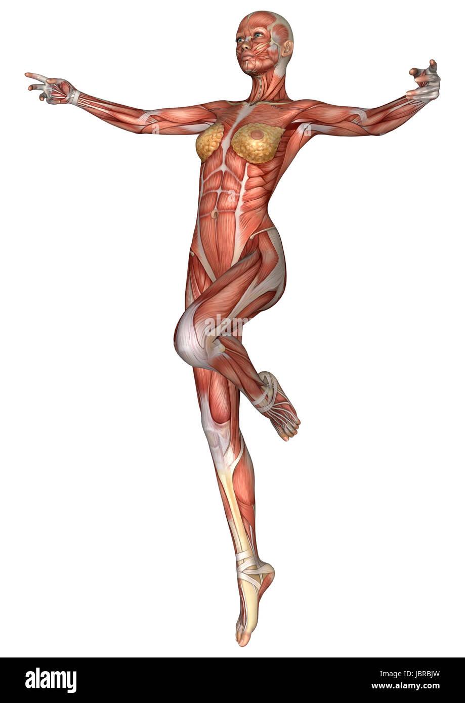 Fantastisch Weibliche Anatomie Bilder Genital Bilder - Anatomie ...