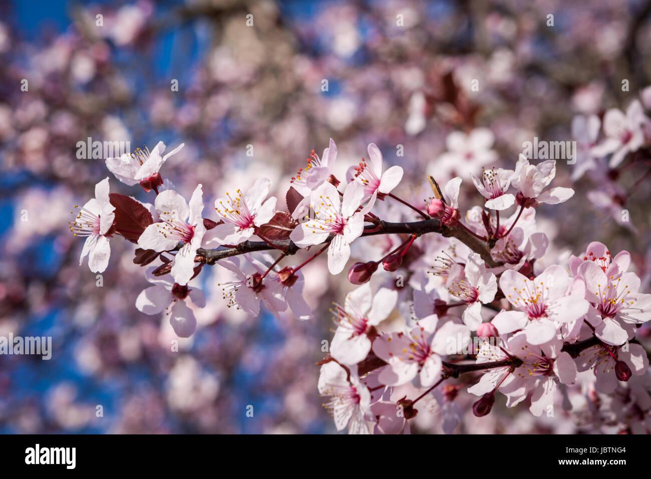Fantastisch Druckbare Frühlingsbilder Bilder - Malvorlagen Von ...