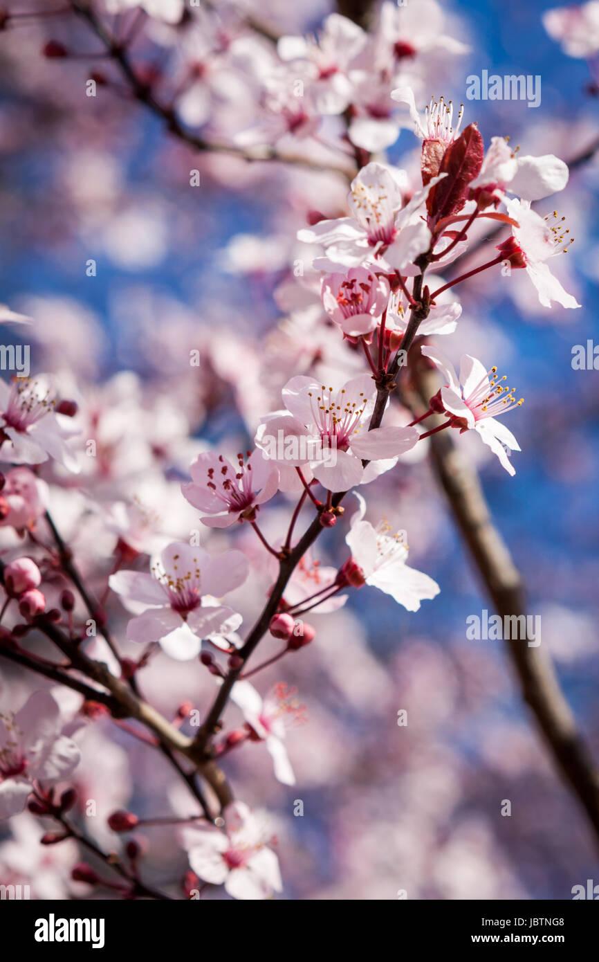 Großzügig Frühlingsbilder Zum Einfärben Zeitgenössisch - Malvorlagen ...