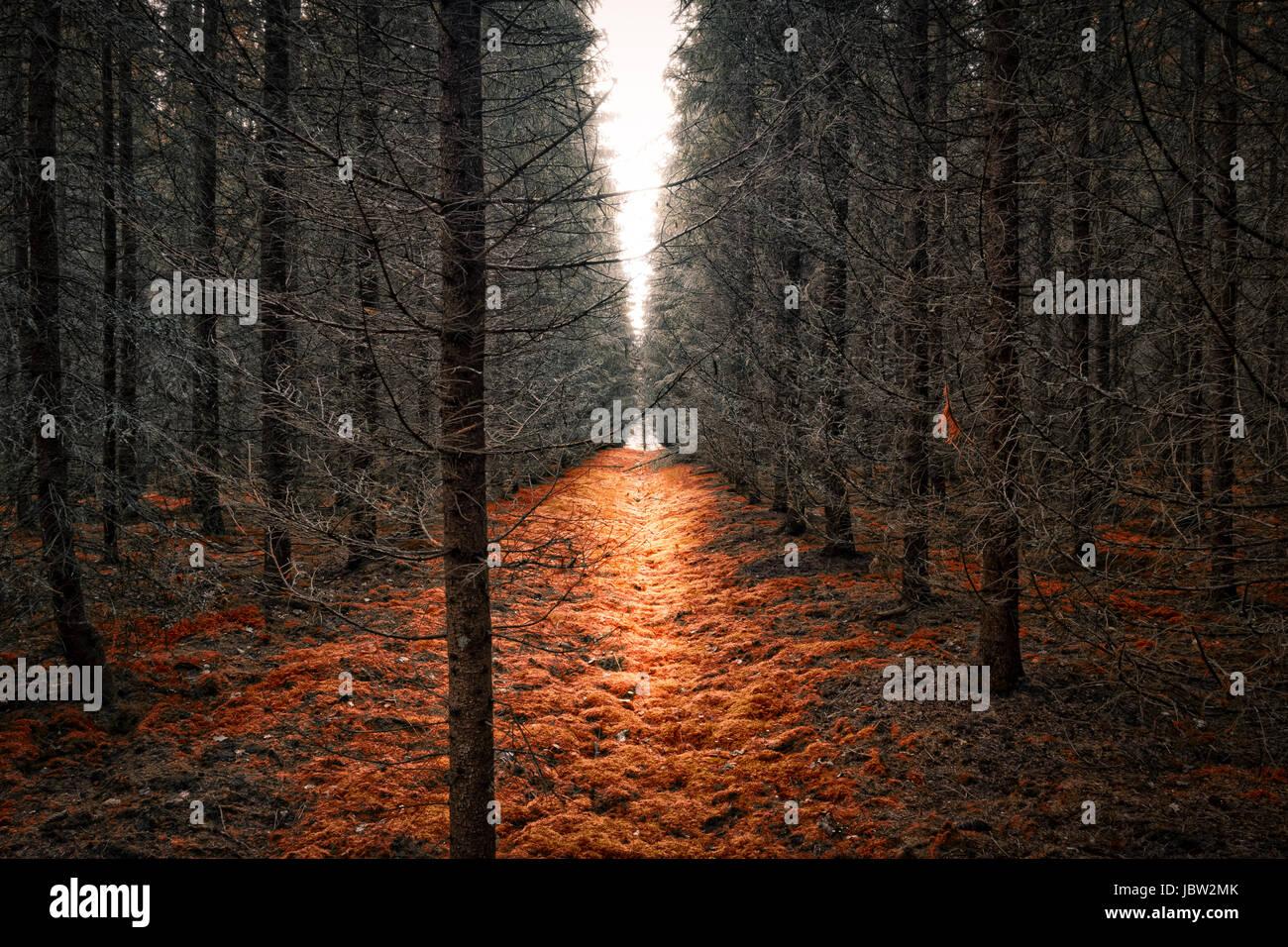 Malerische Landschaft mit Trockenwald und helles Licht Stockbild