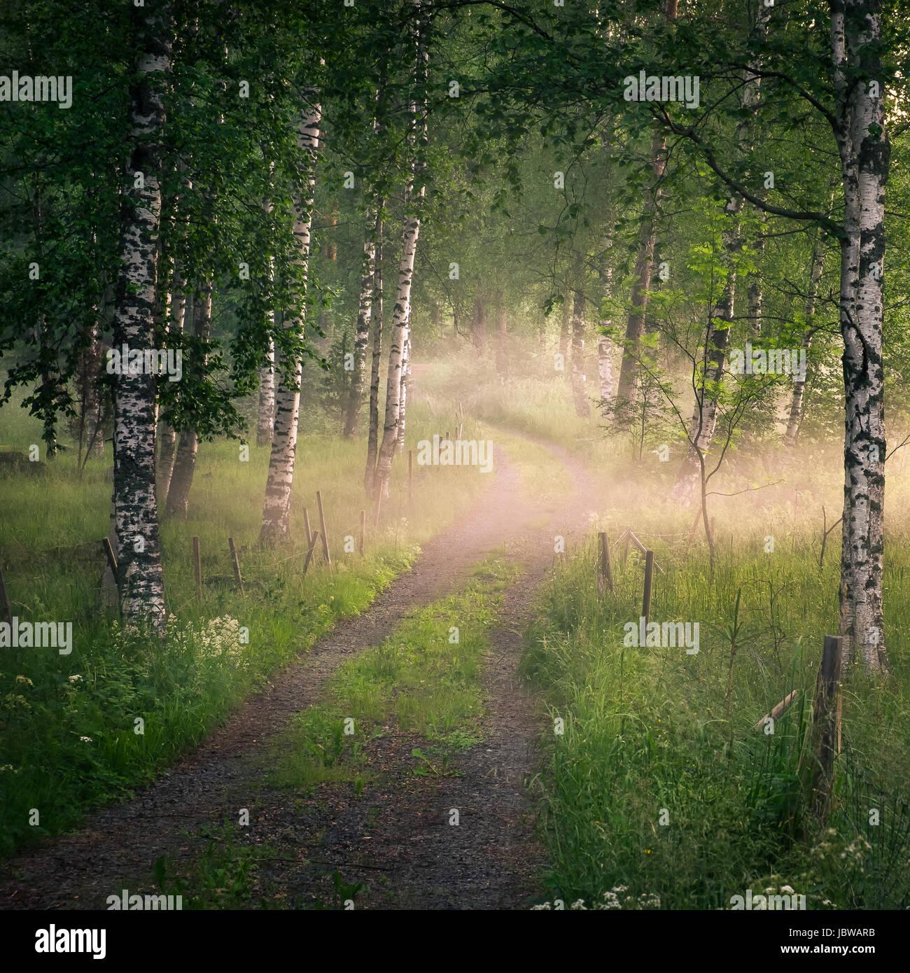 Landschaft mit idyllischen Straßen und Nebel am Sommerabend in Finnland Stockbild