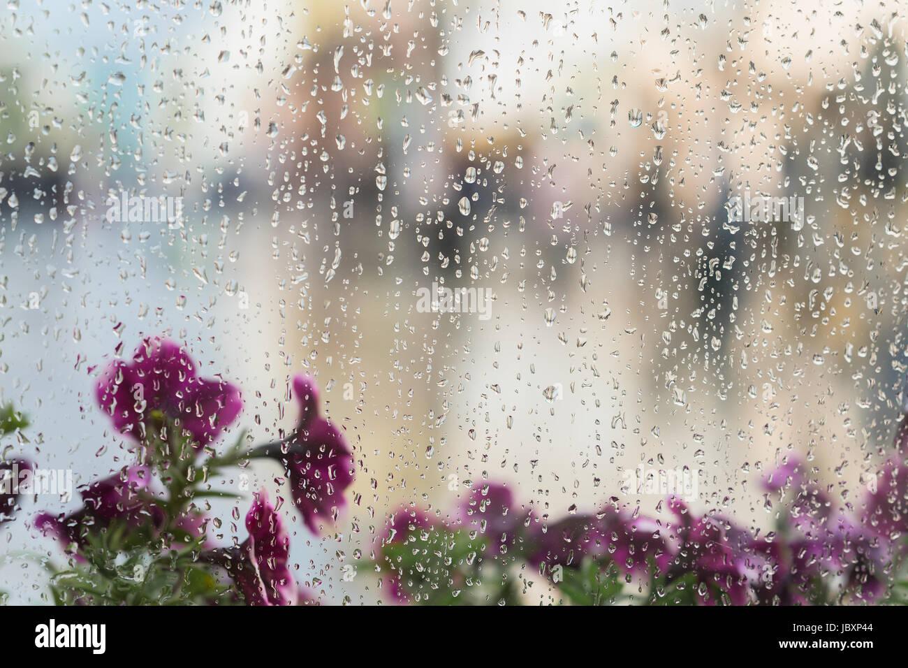 lila blumen hinter dem nassen fenster mit regen f llt verschwommene stra e bokeh konzept der. Black Bedroom Furniture Sets. Home Design Ideas