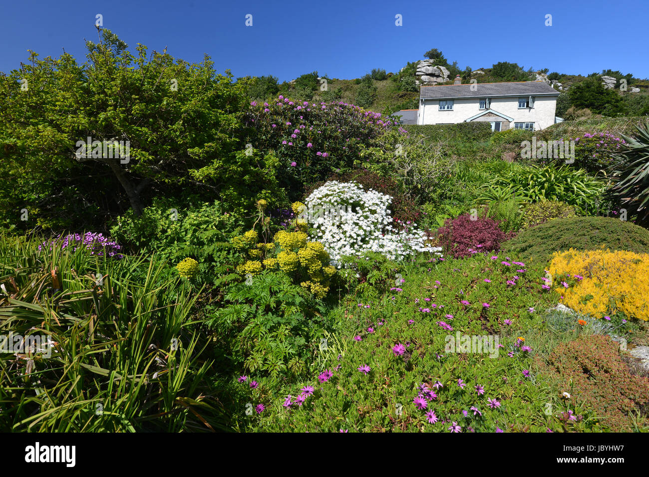 Üppige Vegetation in Bryher, Scilly Islea. Stockbild