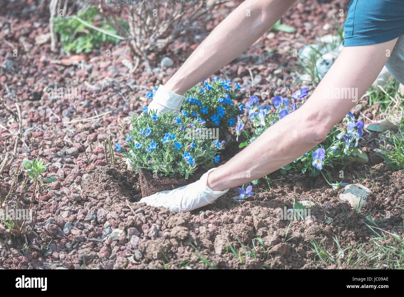 Frühling Zu Hause Im Garten Boden Hacken Und Blumen Pflanzen