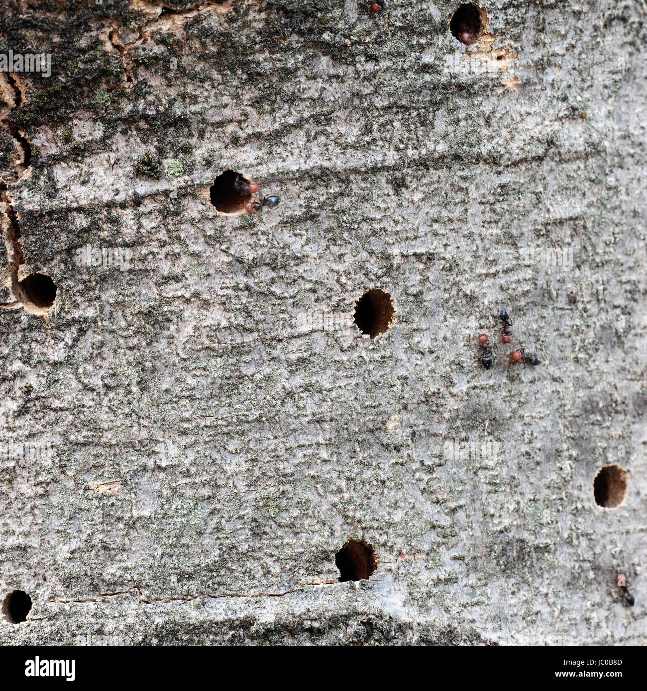 trunk holes stockfotos trunk holes bilder alamy. Black Bedroom Furniture Sets. Home Design Ideas