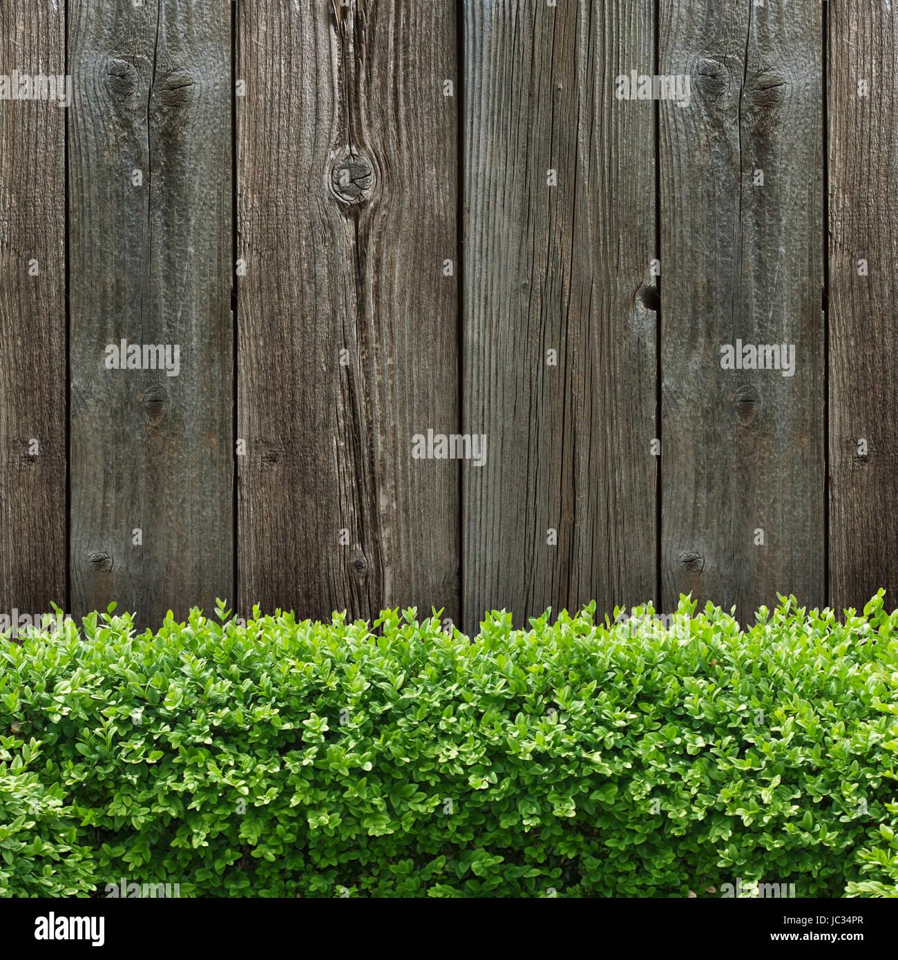 Buchsbaumhecke Stockfotos & Buchsbaumhecke Bilder Alamy