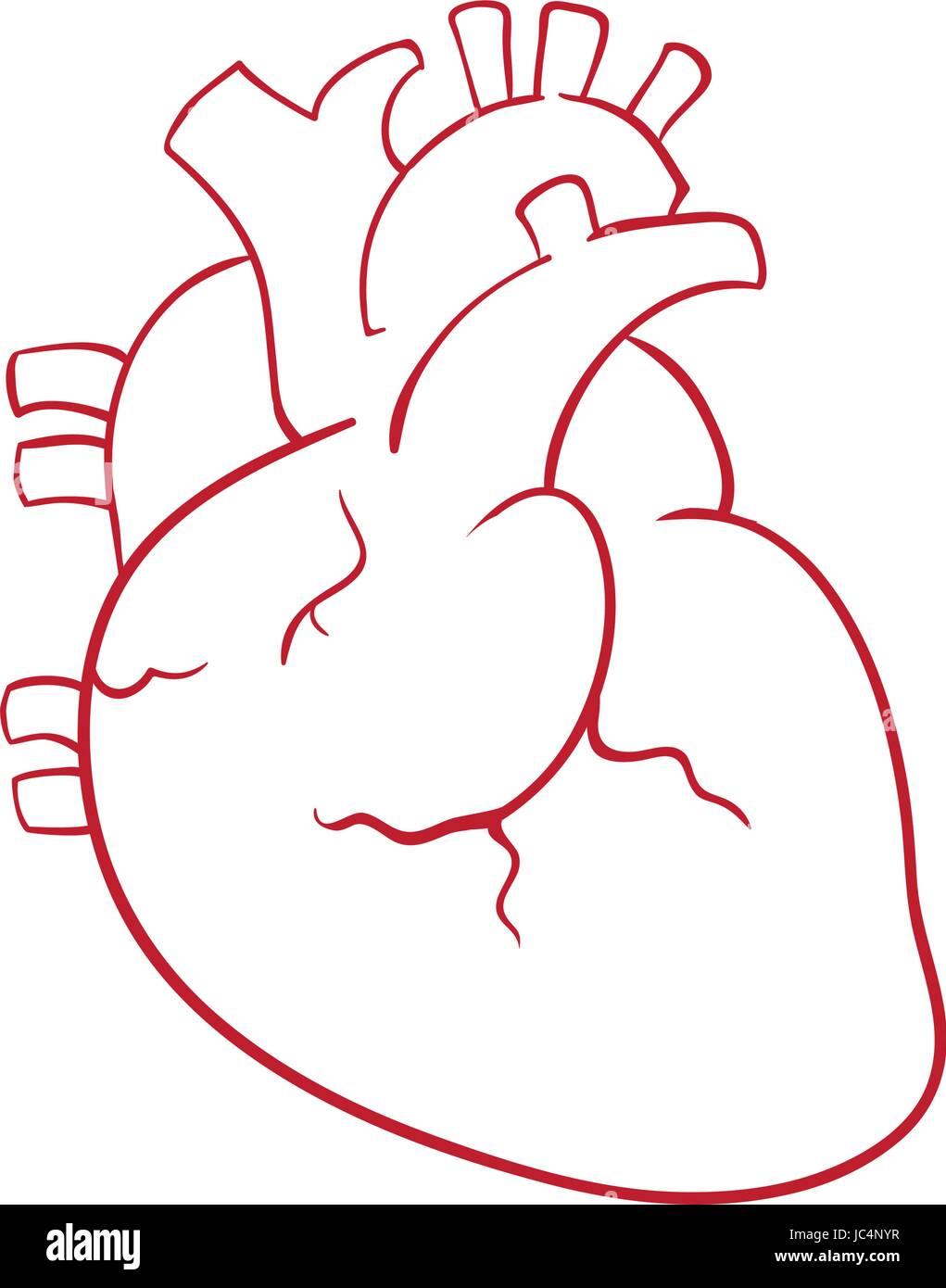 heart human anatomy engraving stockfotos heart human anatomy engraving bilder alamy. Black Bedroom Furniture Sets. Home Design Ideas