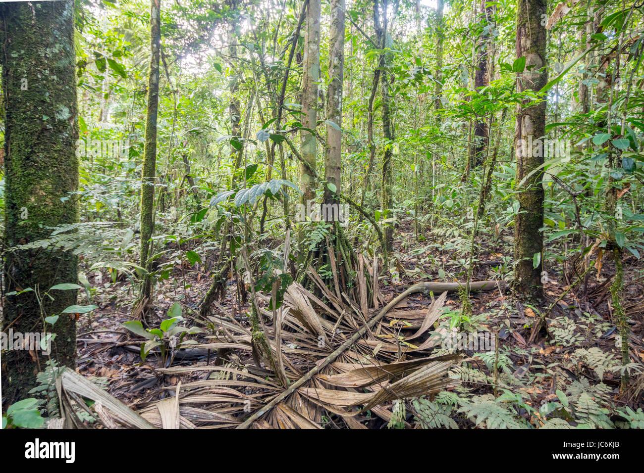 Gefallenen Palmwedel Auf Dem Boden Der Unberuhrten Tropischen